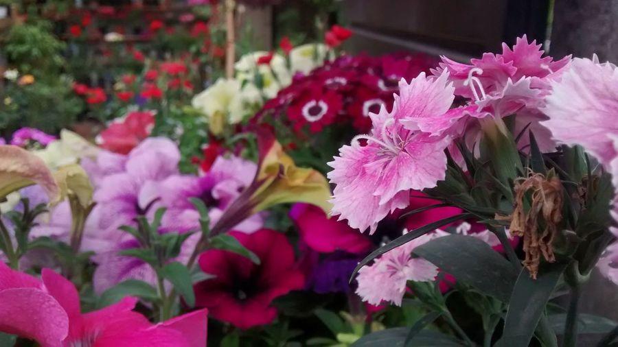 Belleza Flowers EyeEm Best Shots - Nature EyeEm Nature Lover Flower Collection