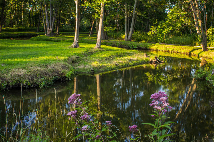 Small creek sunset Creek Creekside Sunset_collection Flower Forest Freshness Grass Purple Flowers Reflection Scenics Serene Outdoors Tranquil Scene Tranquility