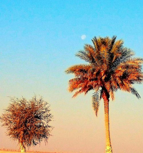 Moon rise .. ? Palm Trees Moonrise On The Road