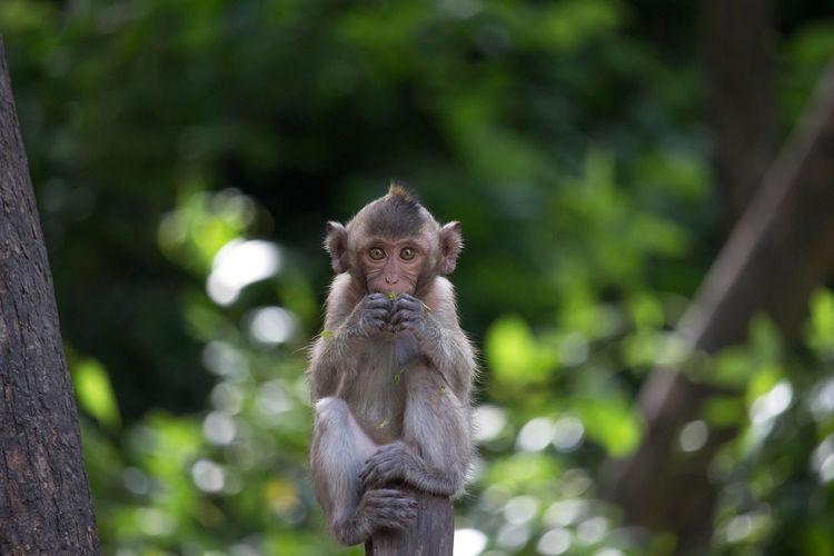 Monkey Animal Mammal Nature Animal Themes Animal Wildlife Animals In The Wild