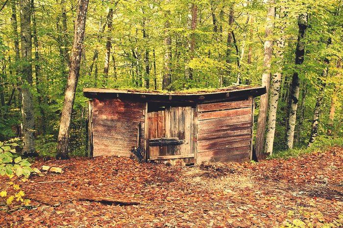 Bolu  Yedigoller Old Autumn