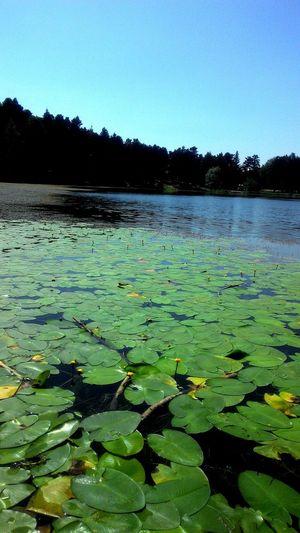 Lake Turkey