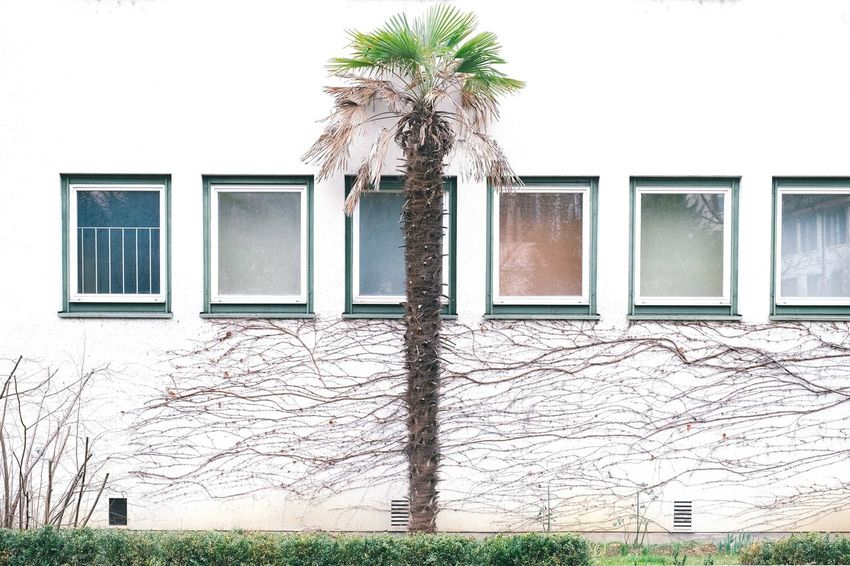 Palm Tree Built Structure Architecture Building Exterior Window Building Plant No People Day Nature House Tree Flower Outdoors Grass Wall