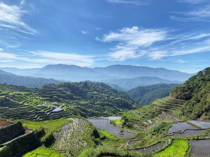 Philippines Nature Hiker Sunset Pinasmuna Pine Tree Tree Tea Crop Mountain Forest Beauty Sky Landscape Mountain Range Terraced Field Rice Paddy Rice - Cereal Plant