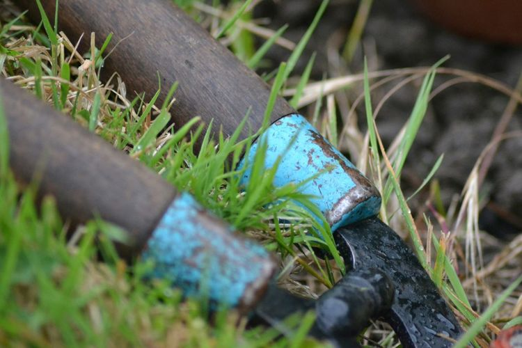 Quite simply a Closeup of some Hedge Clipper . Blue Gardening Old Wooden