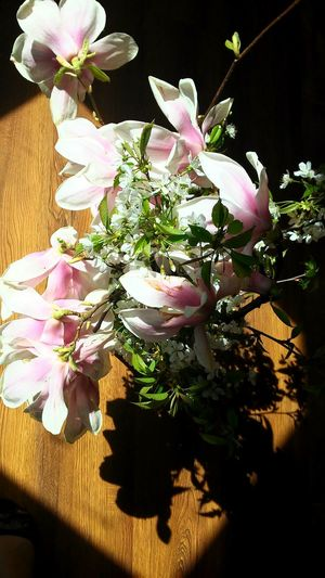 Flower Collection Pink And White Naturelovers Nature Is Art Beauty Around Us Nice Smell Like In The Dream Garden Decor In Sunlight