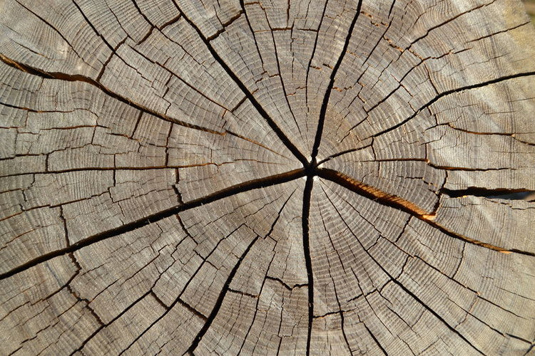 Abstract Backgrounds Brown Close-up Concentric Cracked Cracks In Wood Cross Section Day Full Frame Lumber Industry Nature Nature Collection Nature_collection No People Outdoors Pattern Star Sun And Wood Tree Tree Ring Tree Trunk Tree Trunk Art Wood Wood - Material