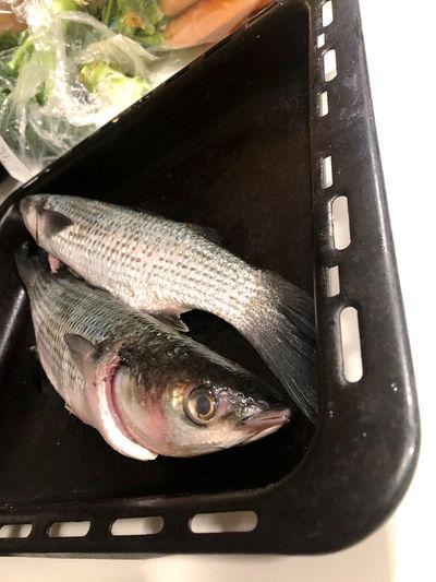 High angle view of fish