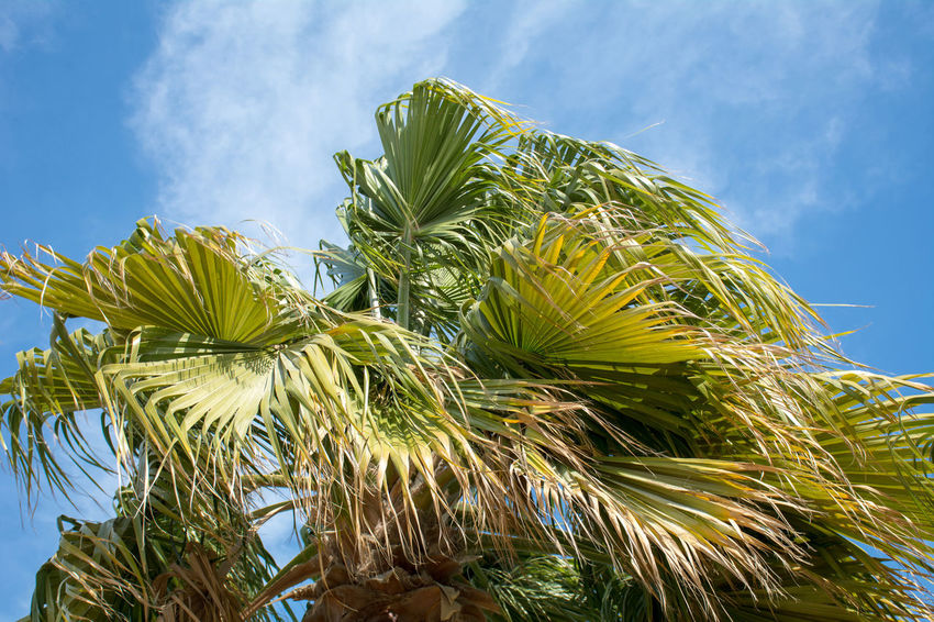 Captured by Beautiful Trees And Flowers Are In The Garden Beauty In Nature Close-up Cloud - Sky Day Freshness Green Color Growth Low Angle View Nature No People Outdoors Palm Tree Plant Sky Tree
