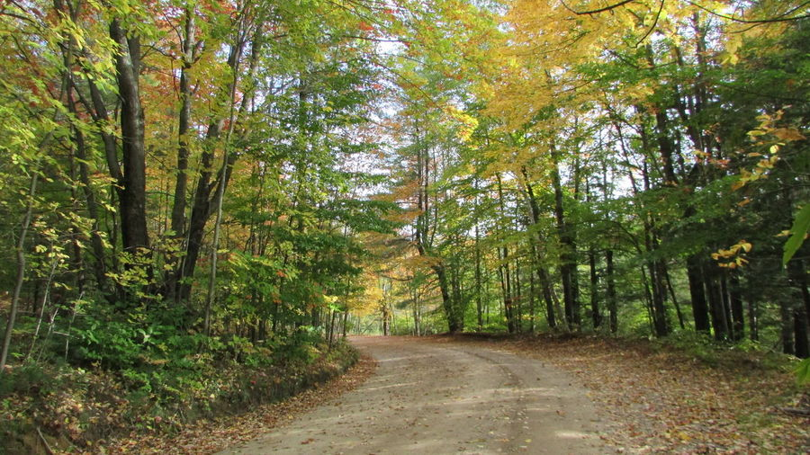 Taking Photos Leaves Starting To Change Dirt Road Whats Around The Corner? Beautiful View Alone... In The ForestTustin Pure Michigan