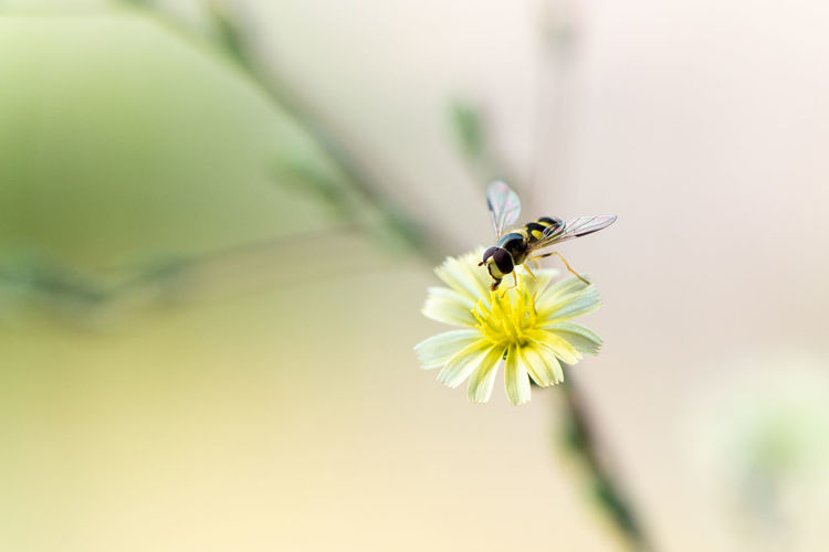 Close-up of insect pollinating on flower