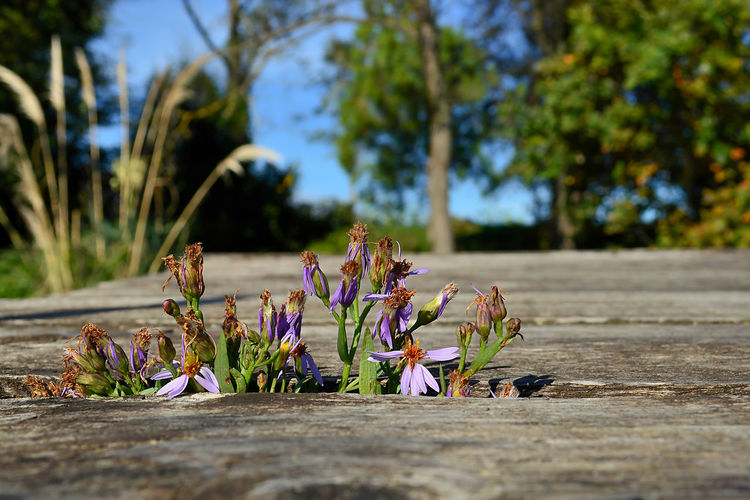 Close-up of flowering plants on footpath