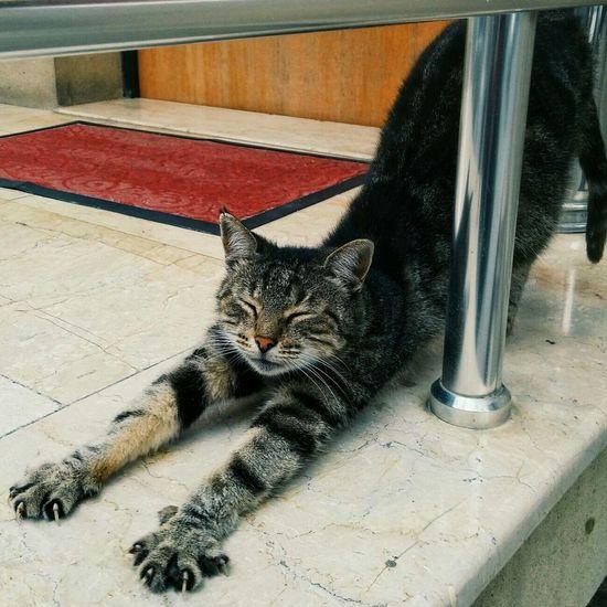 Good Morning Cats Kitty Animals