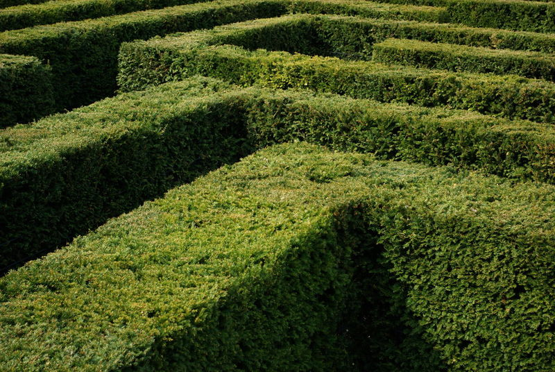 Arrangement Designed English Garden Find The Way Garden Architecture Geometry Geometry In Nature Green Green Color Hedge Labyrinth No People Pivotal Ideas Color Palette Color Palette