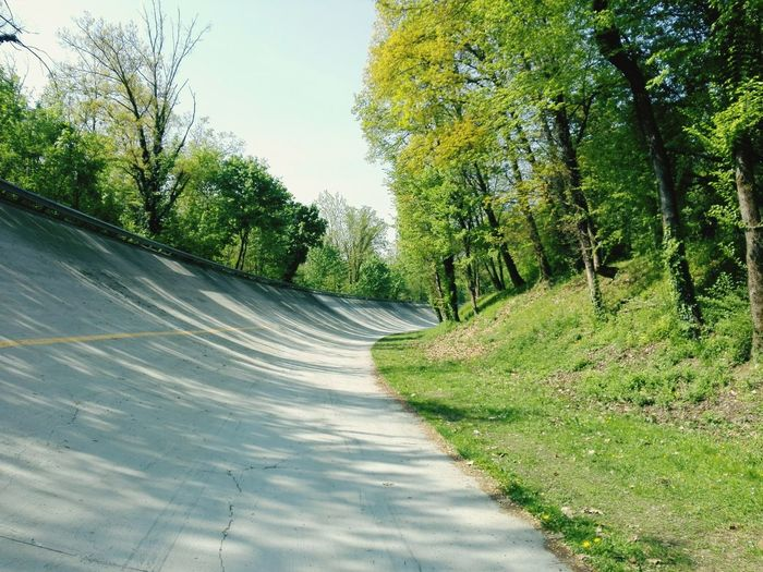Tree Road The Way Forward Nature Day Outdoors No People Growth Curve Sky Beauty In Nature Freshness Italy Italia Monza Autodrome Cars Automobile Sunlight Nature Beauty In Nature Road