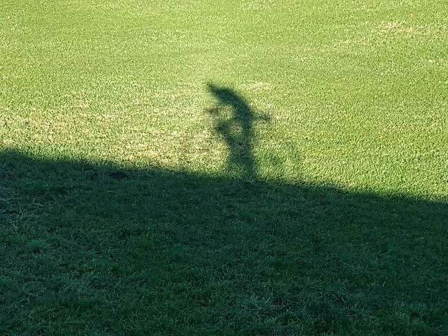 Shadow Focus On Shadow One Person Grass Bicyclist Bicycle Bicycle Shadows Bicyclist Silhouette Silhouette