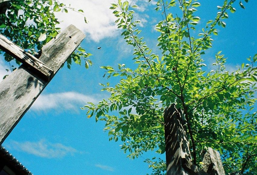 Tree Low Angle View Day Sky Outdoors Blue Green No People Nature Fence Growth Wide Angle Wide-angle Lens Film 35mm Film Film Photography Lomography Lomo LC-Wide LC-Wide Breathing Space