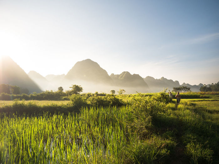 fogrise Bac Son, Viet Nam Morning Rice Paddy The Traveler - 2018 EyeEm Awards Agriculture Beauty In Nature Bright Environment Field Fog Grass Green Color Growth Land Landscape Mountain Mountain Range Nature Outdoors Plant Rural Scene Scenics - Nature Sky Sunlight Sunrise Tranquil Scene Tranquility Tree Valley