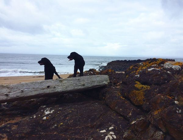 🐾 Labrador Mother And Child Girl Beach Scotland Gullane Golfing Wood Nature Sea Sky Real People Horizon Over Water Water Nature Men One Animal Domestic Animals Outdoors Beauty In Nature Day Mammal Dog EyeEm Best Shots EyeEm Nature Lover