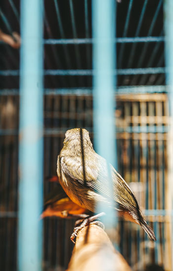 My Best Photo My Best Photo 2019 Caged Cagedbirds Bird Bird Photography Viewpoint Freedom Freedom Of Life Trapped Cage Close-up Prison Pigeon Spread Wings Birdcage