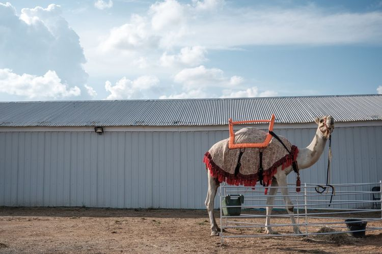 Side view of horse in ranch against sky
