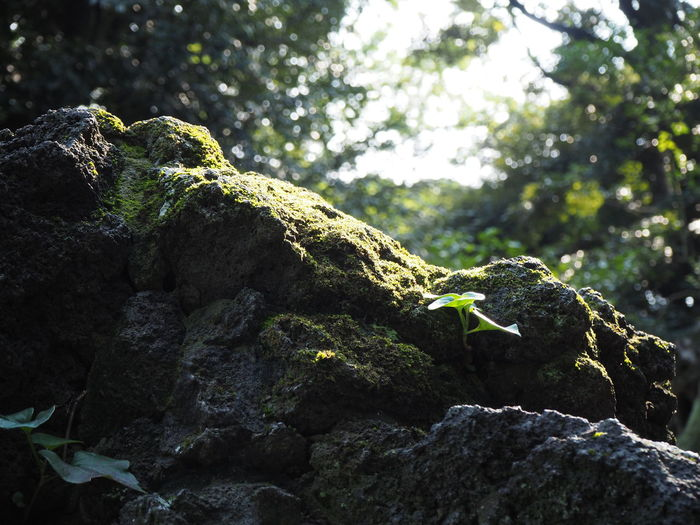 Backlight Mossy Reflection Shadow And Light Sunlight Backlighting Beauty In Nature Close-up Day Green Color Light And Shadow Moss Moss Covered Rocks Moss-covered Mossy Rock Nature No People Outdoors Rock - Object Stone - Object Sun Beams Sunbeam Sunset Tree