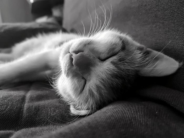 One Animal Pets Animal Themes Mammal Animal Domestic Animals Sleeping Eyes Closed  No People Indoors  Close-up Day Pet Portraits S7 Edge Photography Indoors  S7 Edge Mobile_photographer Cats Of EyeEm Kitten