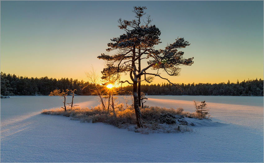 Trees on snowcapped landscape during sunset