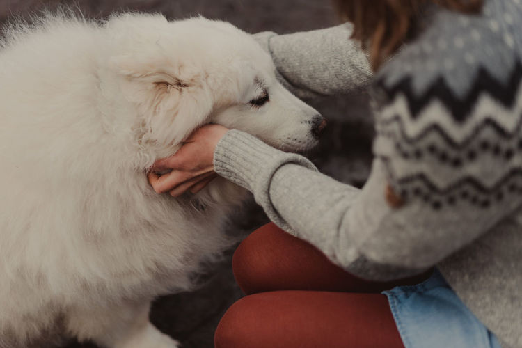 Animal Themes Close-up Day Dog Domestic Animals Friendship Holding Human Body Part Human Hand Indoors  Low Section Mammal One Animal One Person People Pets Real People Sitting