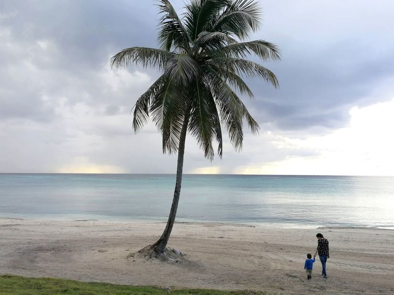 Beach Sea Tree Water Palm Tree Horizon Over Water Sand Cloud - Sky People Beauty In Nature Outdoors Getting Away From It All Dominican Republic Vacations Tranquility Beauty In Nature Mother And Son Scenics Travels Travel Destinations Tourism EyeEmNewHere
