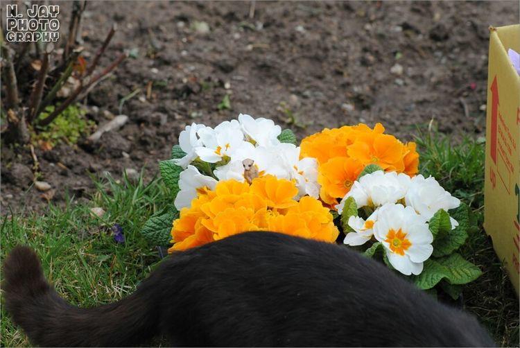 Making Of Last Photo 😁 Cat Flowers Flowerporn Schleich EyeEm Nature Lover Spring Flowers James The Meerkat Figure