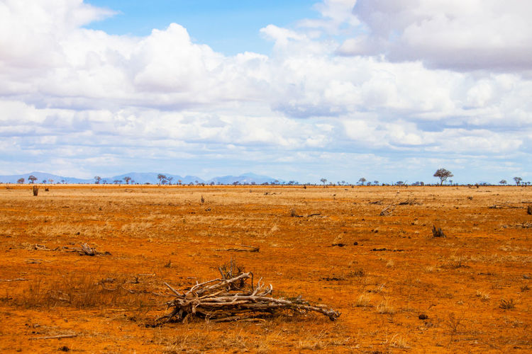 View of field at tsavo east national park