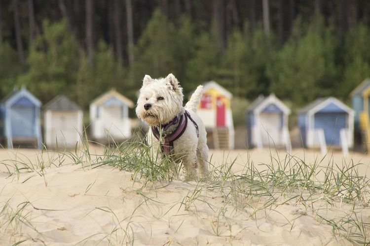 Summer Dogs Westie Wells-next-the-Sea Landscapes With WhiteWall The KIOMI Collection The Great Outdoors - 2016 EyeEm Awards The Great Outdoors With Adobe