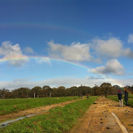 Double Rainbow Landscape Tree Planting