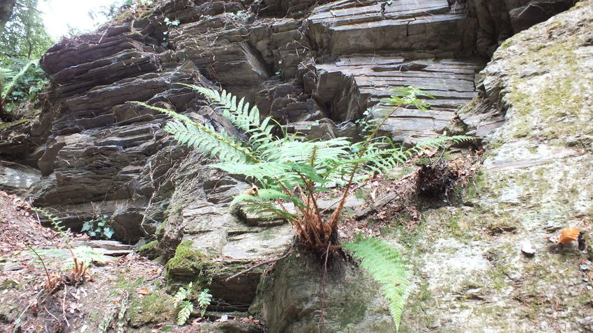 Beauty In Nature Day Growth Nature No People Plant Rock Rock - Object Rock Formation Scenics - Nature Solid Tranquil Scene Tranquility