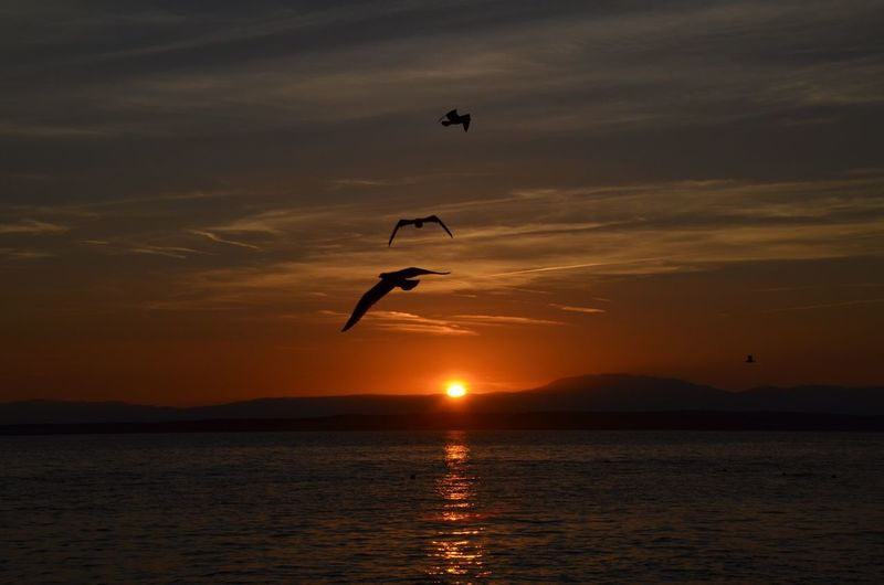 Beautiful sunset in Croatia 🙂 KristinaHopfi Photography Sunset Sea Water Nature Sky Waterfront Croatia Landscape Lost In The Landscape Bird Flying Orange Color Silhouette Mid-air Tranquil Scene Scenics - Nature No People