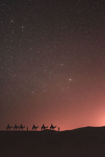 Silhouette camel train on desert against sky at night