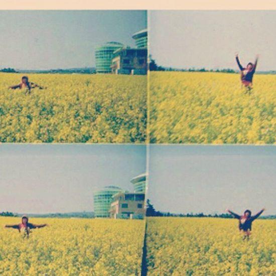 봄 유채꽃 노랑 노랑노랑 토이카메라 4컷 필름카메라 제주도 여행 가고싶당. 아직 인화 못한 필름들은 어디로 갔을꼬.....