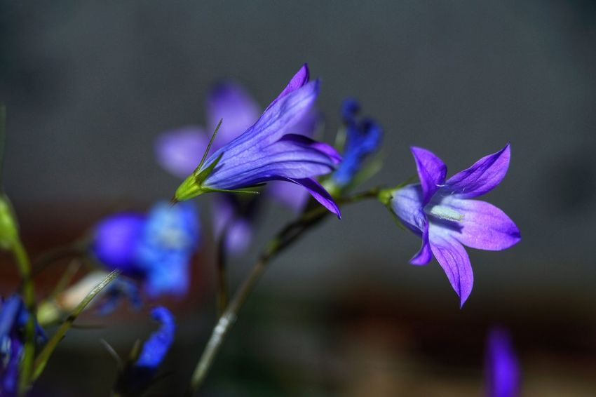 Flower Fragility Freshness Beauty In Nature Petal Nature Purple Close-up Plant Growth No People Blooming Outdoors Water Day