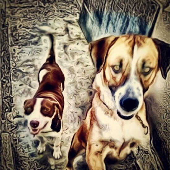 Children of the Garden. Dogs Dog Dog Love Dogslife DogLove Doglover Doggy Dog Lover Doglovers Doglife Dogs Life Doggy Love Dog Portrait Dog Photography Dog Days Dog Photo Dog Photographer Dog Photos Pero Perro Perros  Mutt Mutts Muttlove Muttlife