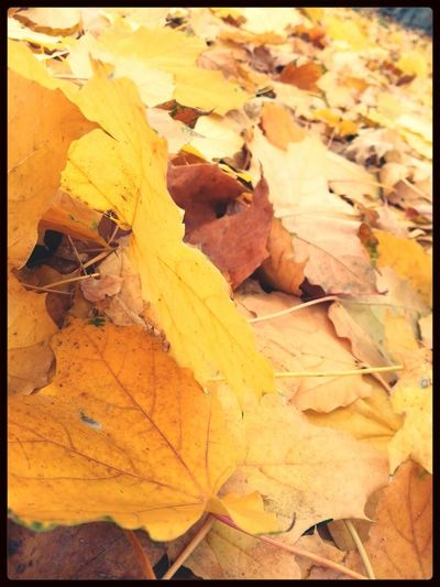 Dani Filter Autumn Leaves