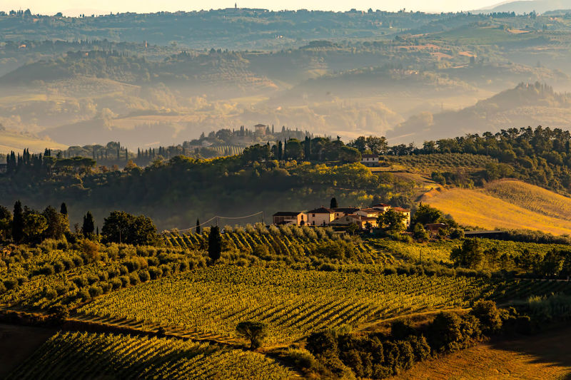 Agriculture Beauty In Nature Beauty In Nature Field Hills Landscape Nature No People Rural Scene Scenics Tranquil Scene Tranquility Travel Destinations Tree Tuscany Tuscany Countryside Tuscany Italy Tuscany Landscape Vineyards  Been There.