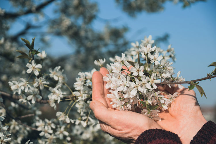 Close-up of woman hand holding flowering plant outdoors