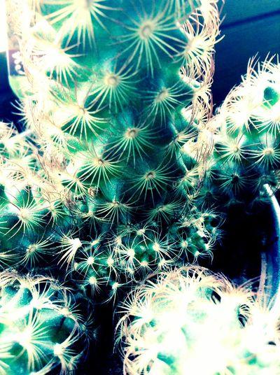 Green Plants 🌱