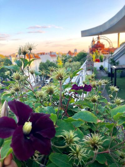 Urbanphotography Urbangardening Gardening In The City Plant Flower Flowering Plant Sky Growth Beauty In Nature Nature Architecture Cloud - Sky Flower Head No People Freshness
