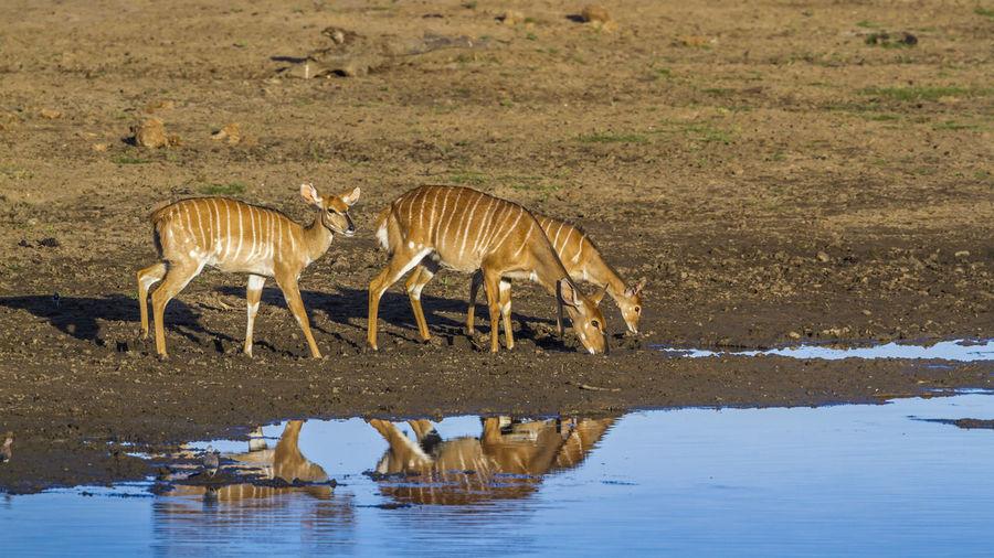 Deer standing on land at lakeshore
