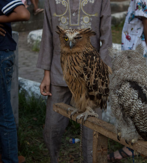 owl Real People