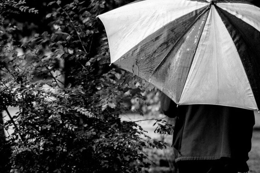 Outdoors Real People Holding Standing Close-up One Person Day People Men Nature Umbrella Rainy Days Sunday