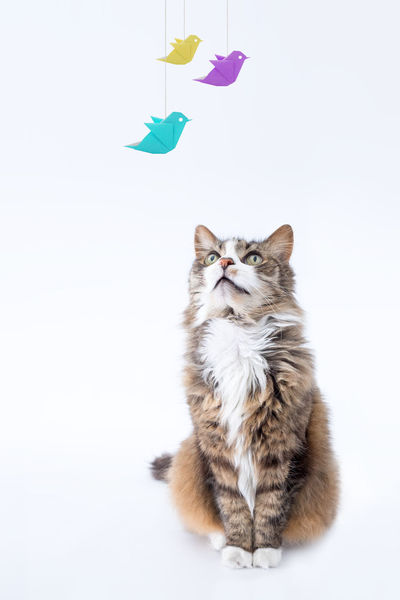 Sweet dreams Animal Animal Head  Animal Themes Bird Cat Close-up Creative Domestic Animals Domestic Cat Dream Feline Front View Humor Humour Mammal No People One Animal Origami Pets Studio Shoot Studio Shot Vision Whisker White Background Zoology
