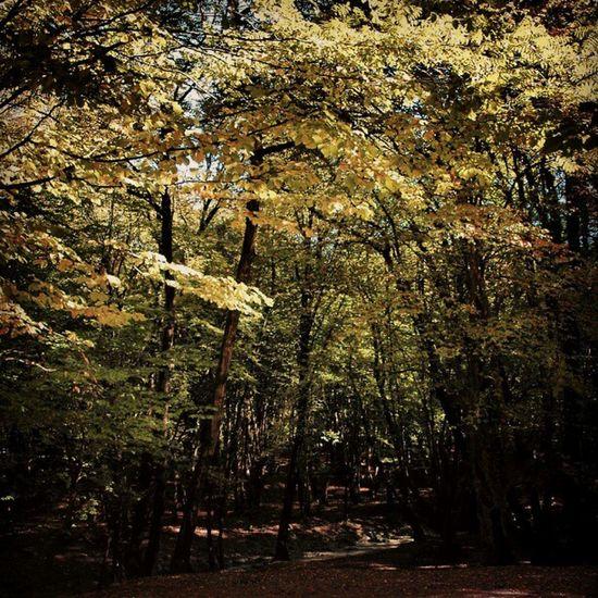 جنگل النگدره گرگان Forest Jungle Iran پاییز Gorgan جنگل طبیعت Golestan گلستان گرگان برگها Nature زیبایی Beauty درختان Trees Alangdareh Leaves ایران Autumn النگدره